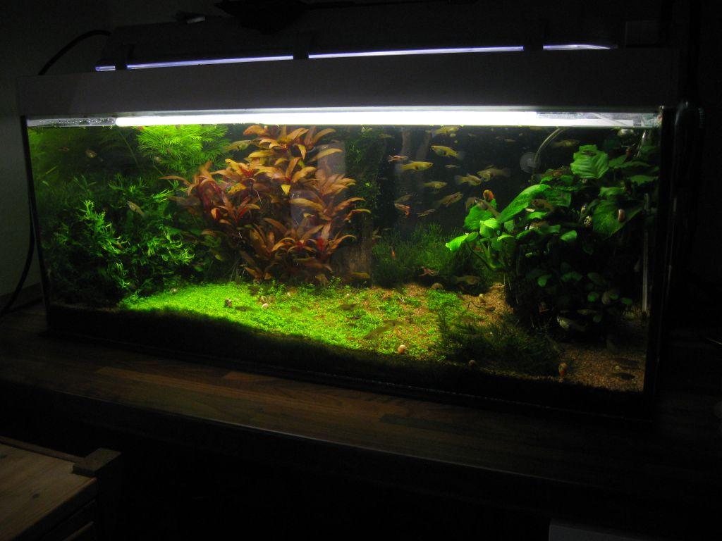 72l becken bis 150l aquaristik sh das forum aus schleswig holstein. Black Bedroom Furniture Sets. Home Design Ideas