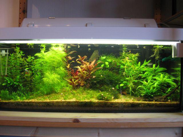 l cher in bl ttern algen n hrstoffmangel n hrstoffe aquascaping aquarium. Black Bedroom Furniture Sets. Home Design Ideas