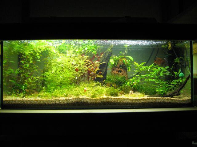 moin aus kiel aquarienvorstellungen aquascaping aquarium wasserpflanzen flowgrow. Black Bedroom Furniture Sets. Home Design Ideas